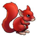 Красная белка шаржа Стоковые Фотографии RF