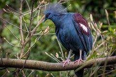 Красная, белая и голубая птица стоковое фото rf
