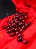 Красная большая вишня Стоковые Фотографии RF