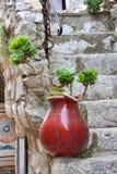Красная ваза с зеленым растением стоит на облицеванных шагах Стоковые Изображения RF