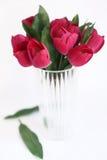 красная ваза тюльпанов Стоковое Фото