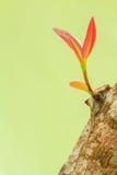 Красная ветвь на журнале Стоковая Фотография RF