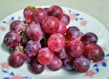 Красная виноградина Стоковая Фотография