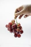 Красная виноградина Стоковые Изображения RF