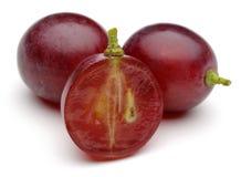 Красная виноградина Стоковая Фотография RF