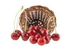 Красная вишня в плетеной корзине изолированной на белизне Стоковое фото RF
