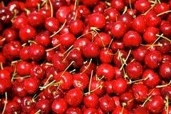 красная вишня стоковые изображения