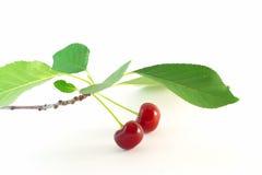 Красная вишня с листьями Стоковое Фото