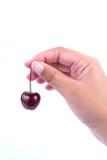 Красная вишня Стоковые Фотографии RF