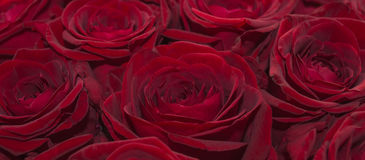 Красная влюбленность стоковые изображения rf