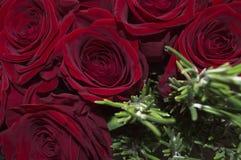 Красная влюбленность стоковое фото