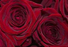 Красная влюбленность Стоковые Фото
