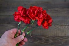 Красная гвоздика Стоковое Изображение RF
