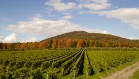 Красная гора и зеленая лоза стоковые фото