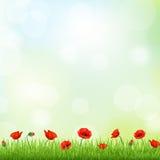 Красная граница мака и травы Стоковое Изображение RF