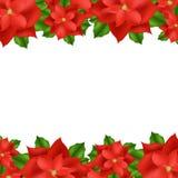 Красная граница Poinsettia Стоковое Изображение RF