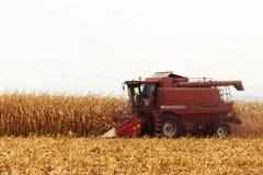 Красная жатка работая на кукурузном поле Стоковые Фотографии RF