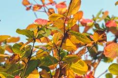 Красная, зеленая оранжевая предпосылка листьев осени Тропическая предпосылка листьев человека kuta острова bali городок захода со Стоковое Изображение RF