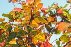 Красная, зеленая оранжевая предпосылка листьев осени Тропическая предпосылка листьев человека kuta острова bali городок захода со Стоковое Фото