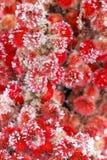 красная зима вегетации Стоковые Фотографии RF