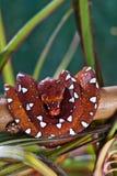 красная змейка Стоковые Фотографии RF