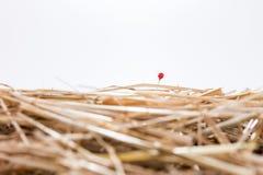 Красная игла в стоге сена Стоковое фото RF