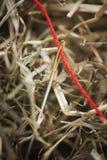 Красная игла потока в вертикали сена Стоковые Фотографии RF