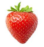 Красная изолированная клубника ягоды Стоковые Фотографии RF