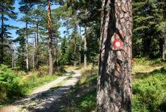 Красная и белая круговая метка на дереве стоковые изображения rf