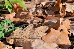 Красная и оранжевая предпосылка листьев осени напольно Красочное изображение backround упаденных листьев осени совершенных для се стоковое изображение rf