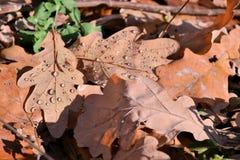 Красная и оранжевая предпосылка листьев осени напольно Красочное изображение backround упаденных листьев осени совершенных для се стоковые изображения rf