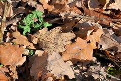 Красная и оранжевая предпосылка листьев осени напольно Красочное изображение backround упаденных листьев осени совершенных для се стоковые фото