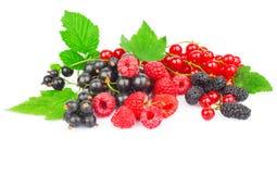 Красная и черная ягода Стоковые Изображения RF