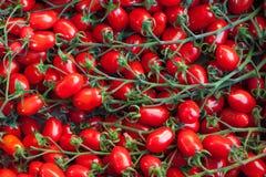 Красная картина предпосылки пука томатов вишни Стоковое Изображение