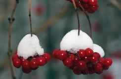 Красная калина в снеге Стоковое Фото