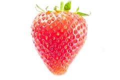 Красная клубника на белой предпосылке Стоковое Изображение RF