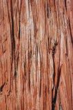 красная кожура Стоковые Изображения