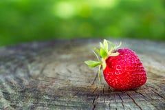 Красная клубника на древесине в саде Стоковая Фотография RF