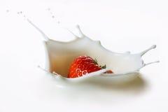 Красная клубника приносить падающ в молоко Стоковая Фотография