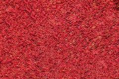 Красная личинка большая куча червей стоковые фото