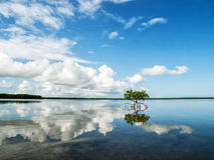 Красная мангрова в отмелом заливе стоковые изображения