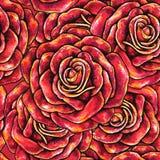 Красная нарисованная предпосылка роз безшовная Стоковая Фотография RF