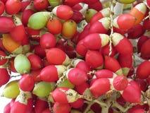 Красная нега Стоковая Фотография RF