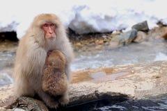 Красная обезьяна на парке обезьяны снега в Японии Стоковое Изображение RF