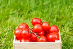 Красная ложь томатов в коробке Стоковая Фотография