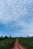 Красная дорога под голубым небом стоковое фото rf