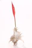 Красная орхидея на белой предпосылке Стоковые Изображения