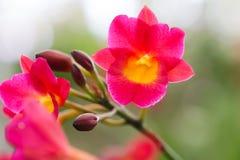 Красная орхидея в предпосылке нерезкости сада Стоковое Изображение RF