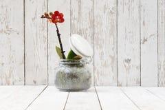 Красная орхидея в стекловарном горшке, на белых деревянных планках Стоковые Фото