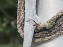 Красная оса летая Стоковое Изображение RF